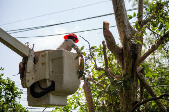 Technician staff cut trees from the electrical cable area to reduce power outages